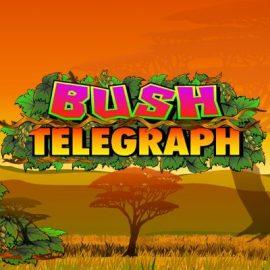 Bush Telegraph Slot